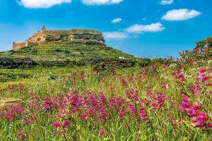 Spring time in Gozo