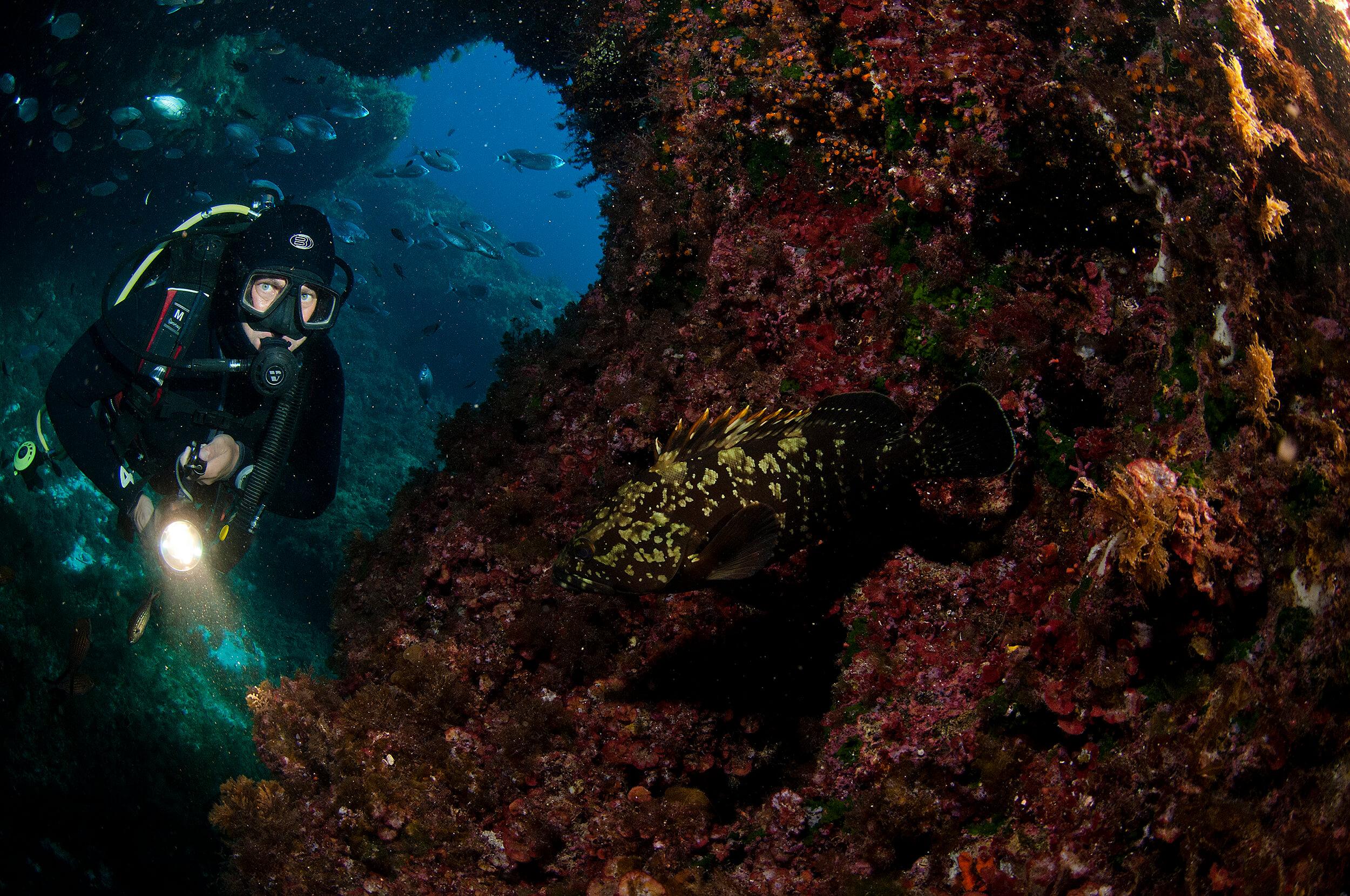 Grouper scuba diving