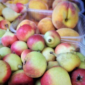 Bambinella & Peaches
