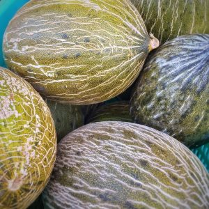 Netted Melons