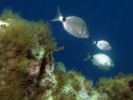Ħalq-Ħamiem-Gozo-Diving-3-426x320