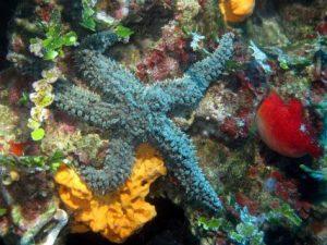 Ħawrija-Gozo-Diving