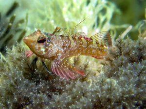 Ħondoq-Bay-Gozo-Diving