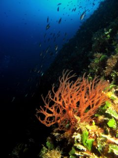 Anchor-Reef-Gozo-Diving