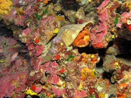 Blue-Hole-Chimney-Reef-6-427x320