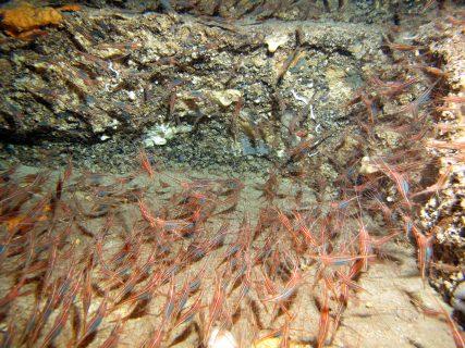 Calypso-Tunnel-Gozo-Diving-3-1-427x320