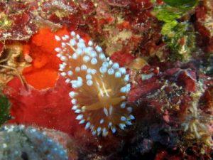 Dawra-tas-Sanap-Gozo-Diving