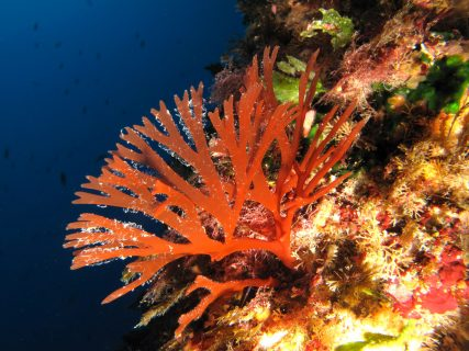 Double-Arch-Reef-Gozo-Diving-4-427x320