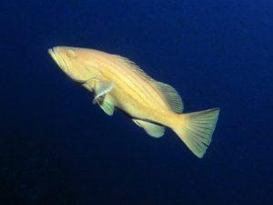 Fessej-Rock-Gozo-Diving
