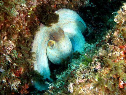 Fungus-Rock-Gozo-Diving-3-425x320