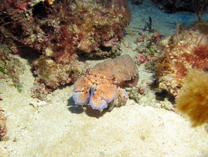 Għar-Dorf-Anchors-Gozo-Diving-1-425x320