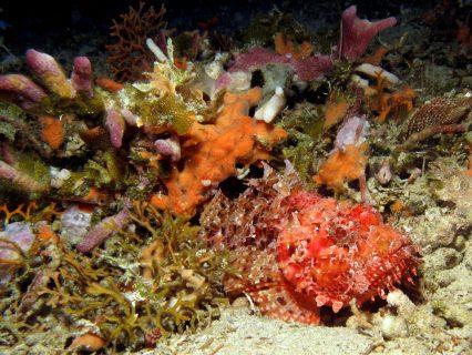 Hekka-Point-Gozo-Diving