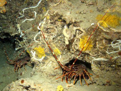 Hekka-Point-Gozo-Diving-4-425x320