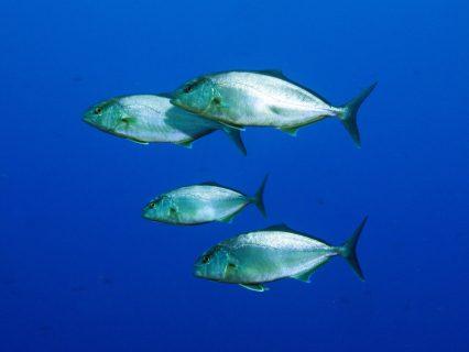 Ras-il-Ħobż-Gozo-Diving-3-426x320
