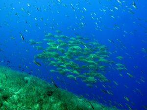 Ras-il-Ħobż-Gozo-Diving
