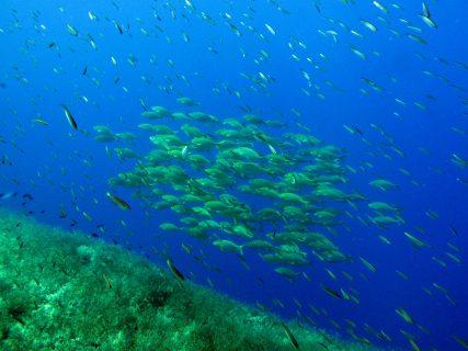 Ras-il-Ħobż-Gozo-Diving-5-427x320