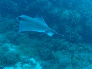 San-Dimitri-Point-Tirxa-Gozo-Diving