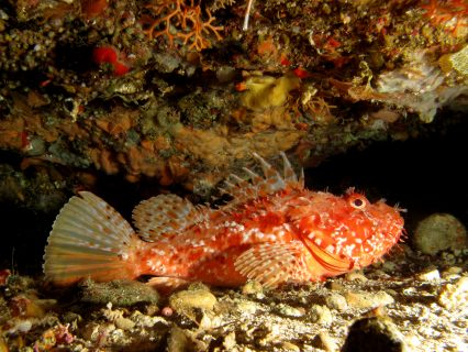 San-Dimitri-Point-Tirxa-Gozo-Diving-4-426x320