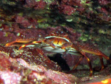 Santa-Maria-Breakwater-Diving-3-426x320