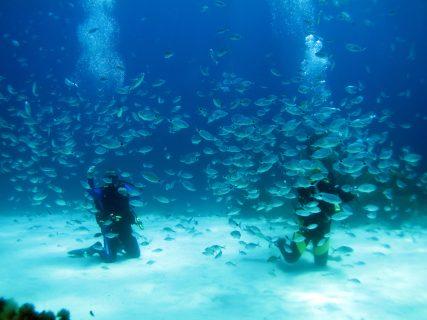 Santa-Maria-Caves-Gozo-Diving