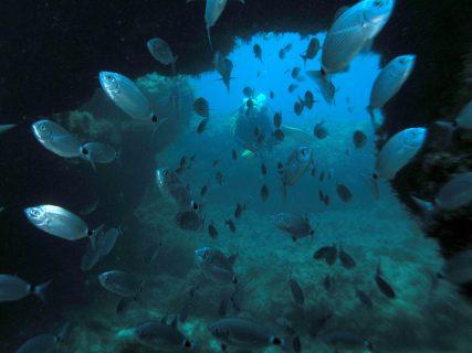 Santa-Maria-Caves-Gozo-Diving-3-427x320