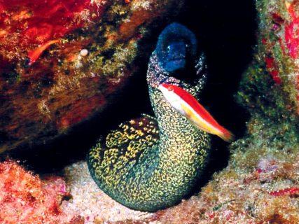 Ta'-Tejtu-Gozo-Diving
