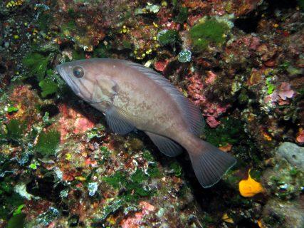 Ta'-Tejtu-Gozo-Diving-2-427x320