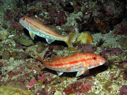 Ta'-Tejtu-Gozo-Diving-3-426x320