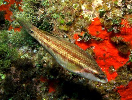 Ta-Pawla-Gozo-Diving-2-424x320