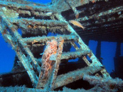 Wreck-MV-Cominoland-Gozo-Diving-3-427x320