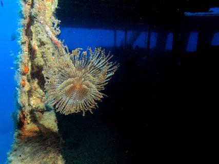 Wreck-MV-Cominoland-Gozo-Diving-8-427x320