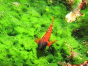 Xlendi-Cave-Reef-Gozo-Diving