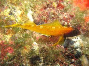 Xwejni-Bay-Gozo-Diving