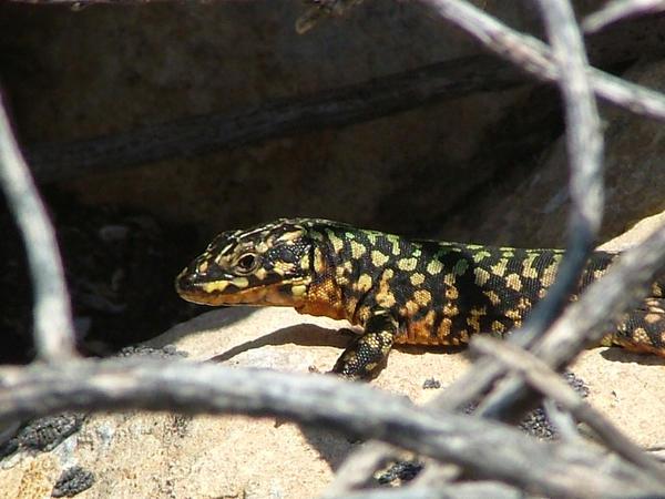 Wildlife photography in Gozo