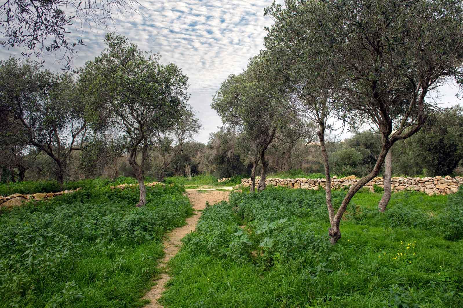 Blankas-Garden-path