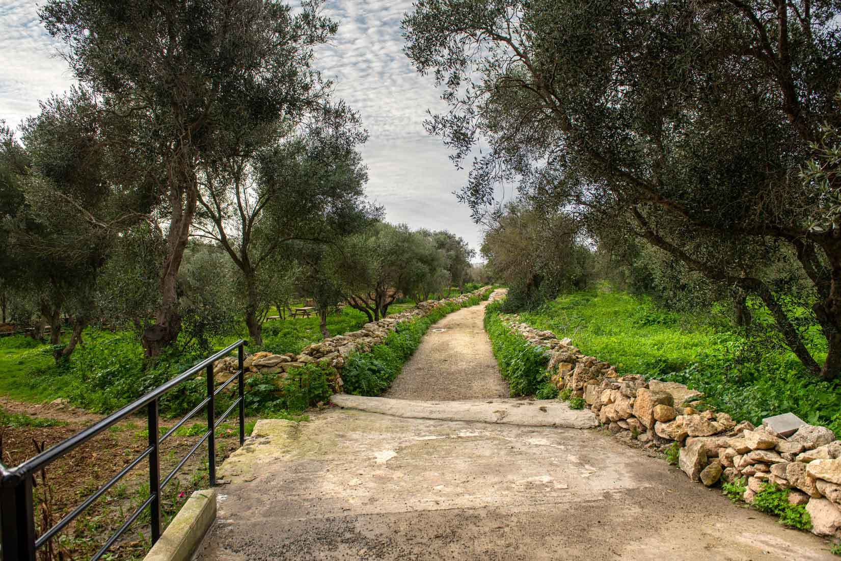 Ta-Blankas-Olive-Grove